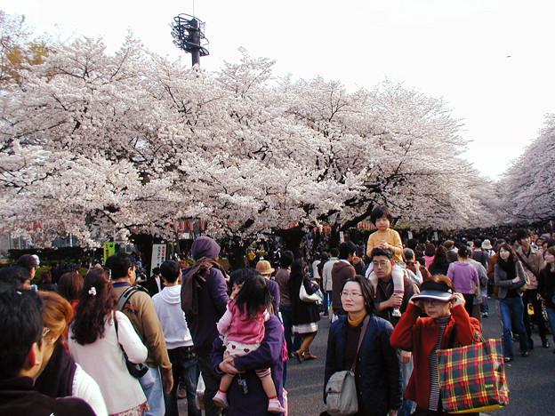 上野公園 桜#2