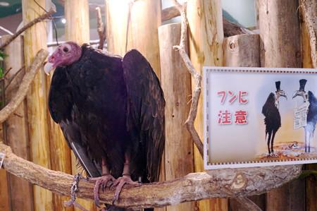 めっちゃさわれる動物園 #44