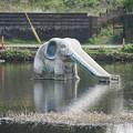 Photos: ゾウの滑り台