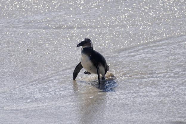 Photos: ボルダーズビーチ