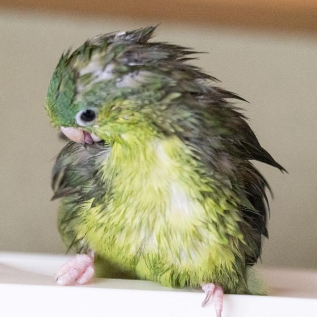 久しぶりの水浴び 1