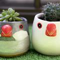 Photos: 文鳥植木鉢