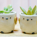 Photos: シマエナガ 植木鉢