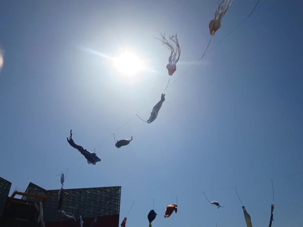 魚たちの泳ぐ空