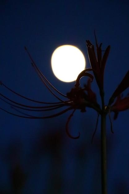 月を抱いて