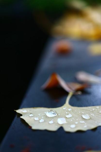 Photos: 秋雨