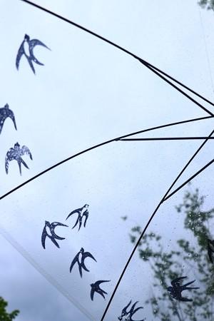 雨空のツバメ