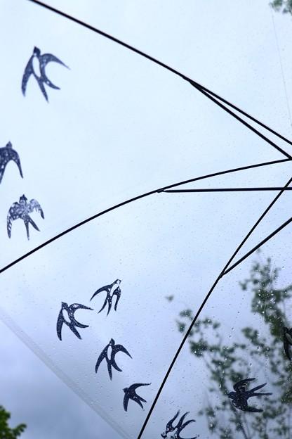 Photos: 雨空のツバメ