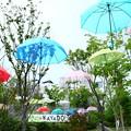 Photos: 雨空に浮かぶ傘