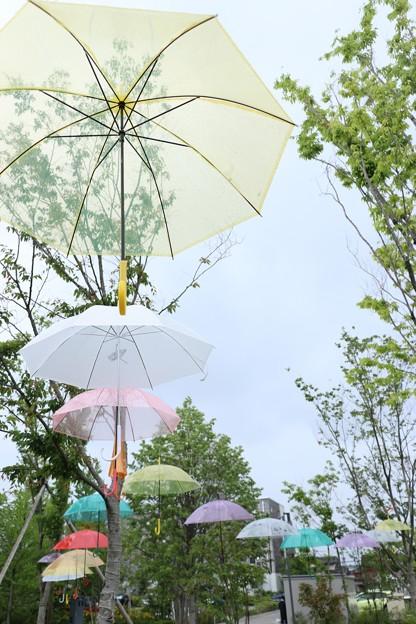 Photos: カラフルな傘