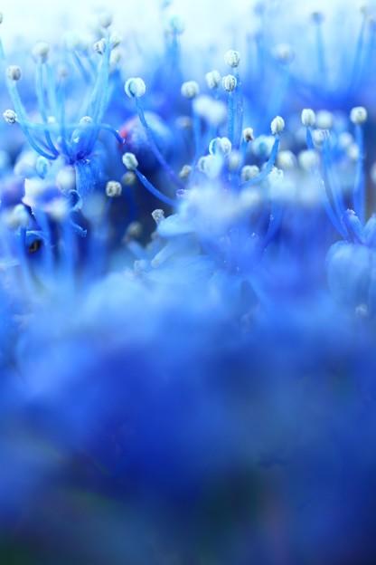 Photos: 青い森