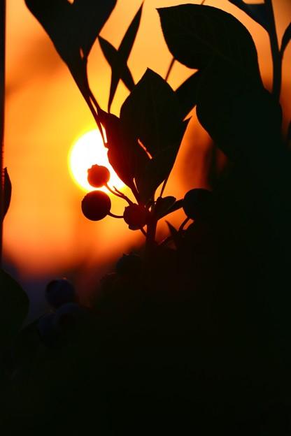 夕焼けブルーベリー