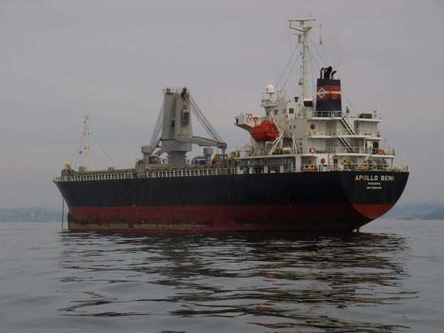 Cargo ship - APOLLO BENI