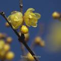 写真: 春の便り