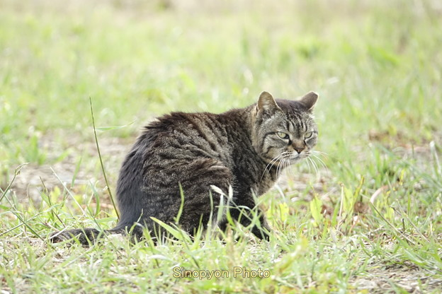 Photos: 猫激写撮影会
