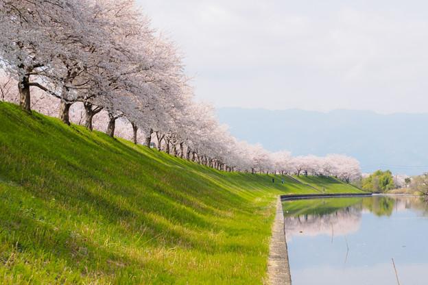 春の訪れ。
