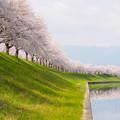 Photos: 春の訪れ。