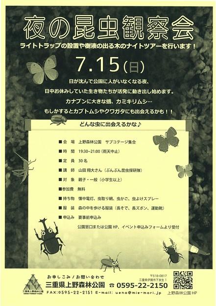 夜の昆虫観察会