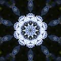 写真: アジサイの万華鏡