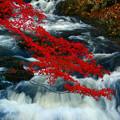 Photos: モミジと滝