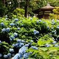 Photos: 館山史跡公園