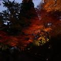 Photos: 中尊寺の紅葉