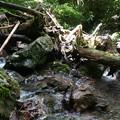 写真: 木の陰も鉄板