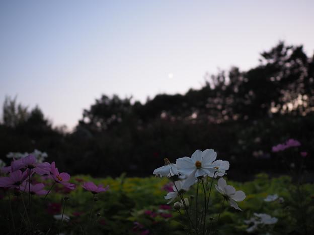 Photos: PA200011