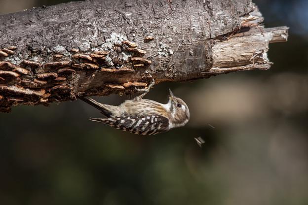 Photos: 野鳥