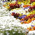 Photos: 花々