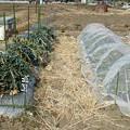 葉山農園1(縮小)