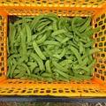 Photos: 収穫野菜2(縮小)