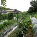 のほほん農園風景(縮小)