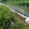 のほほん農園2(縮小)