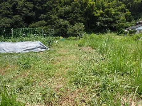 草刈2(縮小)