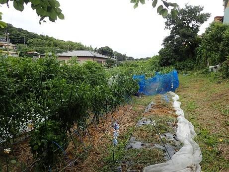 のほほん農園風景1(縮小)