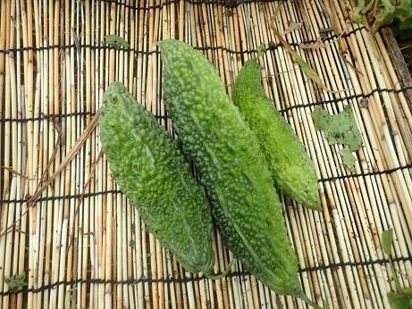 収穫野菜6(縮小)