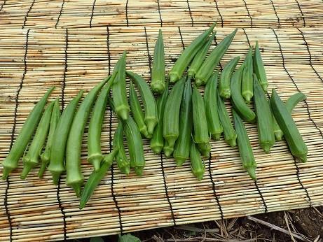 収穫野菜8(縮小)