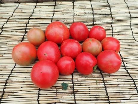 収穫野菜9(縮小)