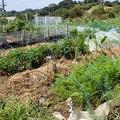小さな菜園1(縮小)