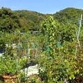 屋上菜園風景(縮小)