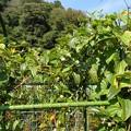 屋上菜園1(縮小)