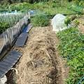 菜園2(縮小)