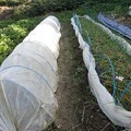 Photos: のほほん農園8(縮小)