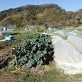 葉山農園3(縮小)