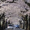 桜が丘通り