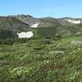 お花畑の向こうにトムラウシを望む
