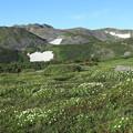 Photos: お花畑の向こうにトムラウシを望む