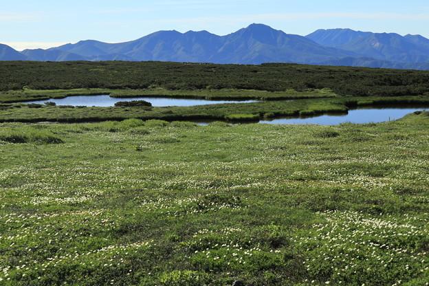 地塘の周りに広がるお花畑