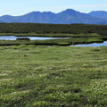 写真: 地塘の周りに広がるお花畑